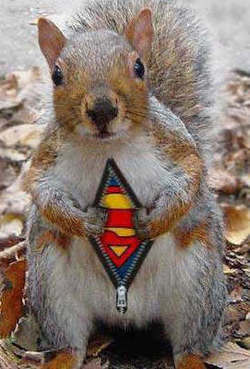 Squirrel_superman